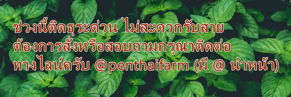 สมุนไพรไทยแท้